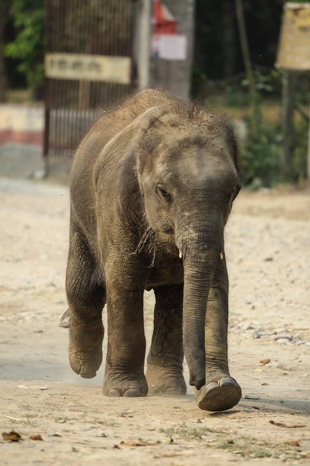 Kasara's Baby Elephant