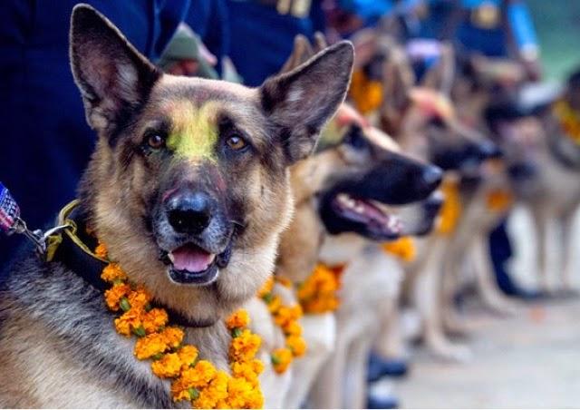 Nepal-Dogs