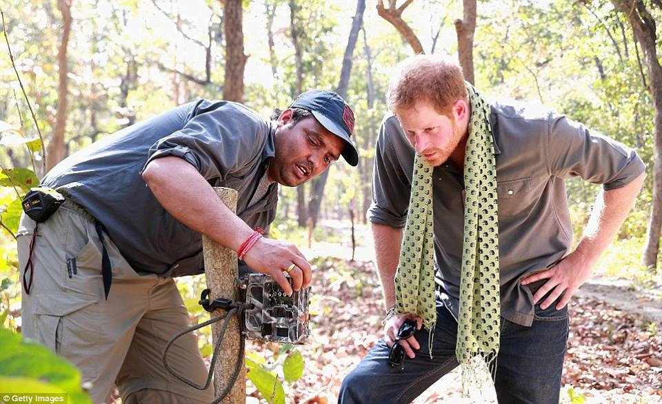Checking the tiger camera trapping in Bardia
