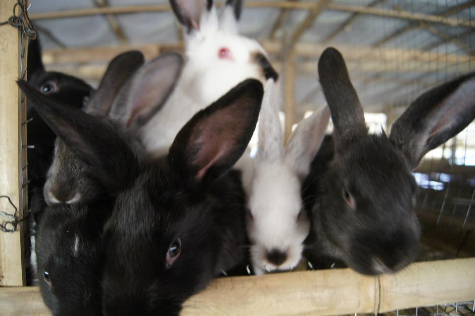 Rabbits get ready for a photo!