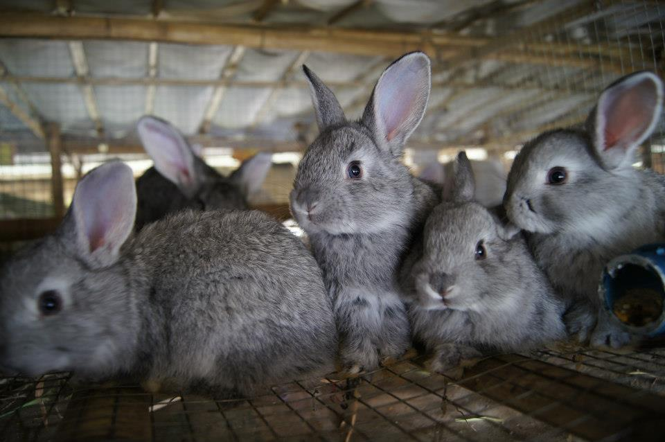 Rabbits in the farm, how cute!