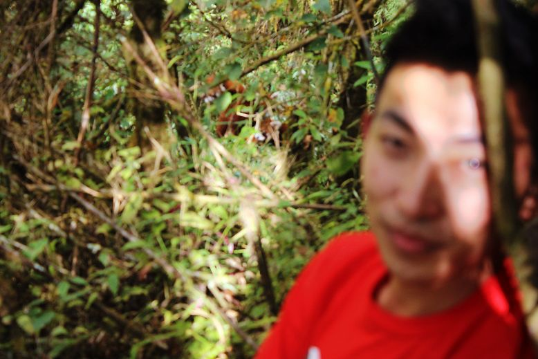 Red-Panda-Ilam-Nepal (2)