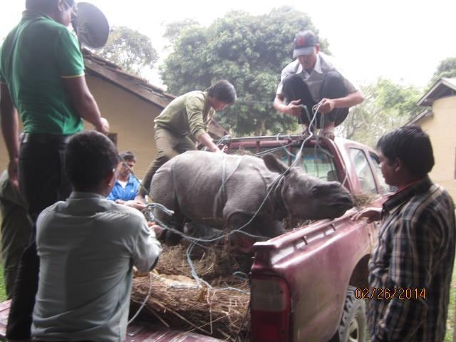 Rescued Baby Rhino Chitwan 5