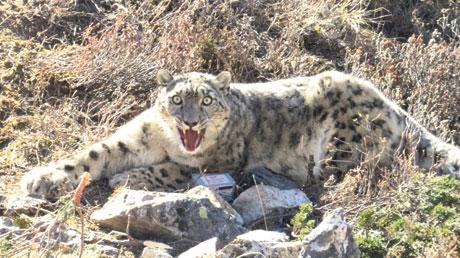 Photo: Kamal Thapa/WWF Nepal