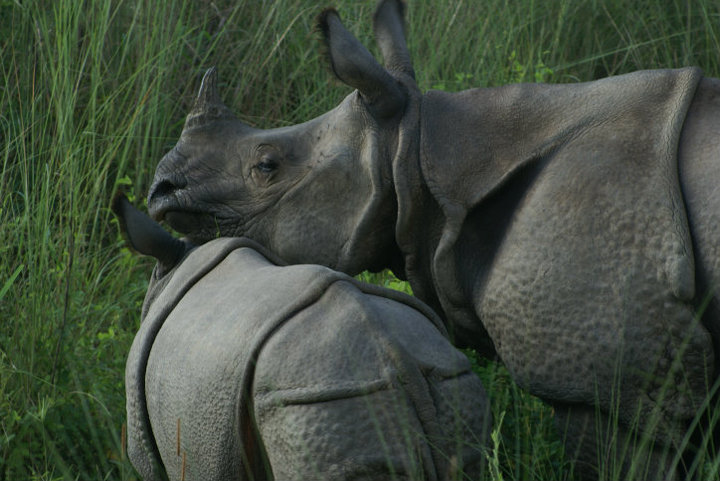 Chitwan National Park. Photo by me, 2009.